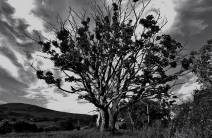 Tree On Family Farm, Kilcar Co. Donegal