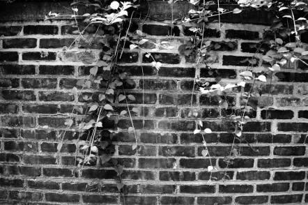 Brick Wall Backdrop-Central Park